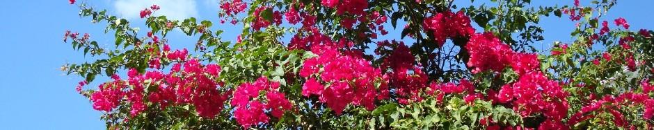 Quinta-Flores